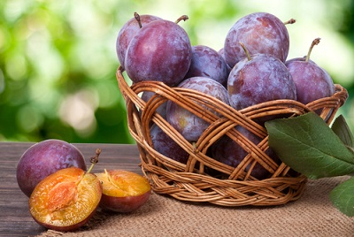 Enjoy your Plums until the end of October